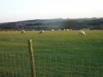 Baar Humbug- Sheep busy bleating the Christmas Blues