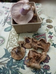 Our collection of foraged blewits