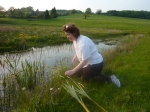 Steph kneels by the pond to collect some bulrush