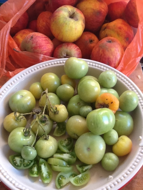 Green tomato and Apple gifts -Yipee!
