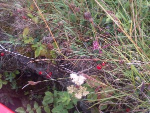 Tantelising tastes of summer wild Strawberries