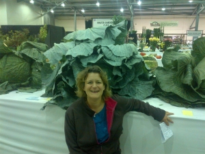 Cabbage mania