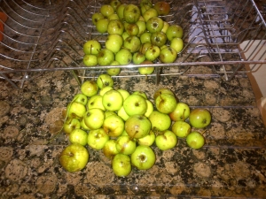 Crab apples draining!