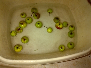 Crab Apples washing